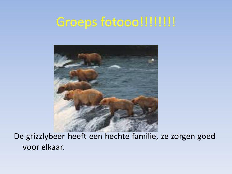 Groeps fotooo!!!!!!!! De grizzlybeer heeft een hechte familie, ze zorgen goed voor elkaar.
