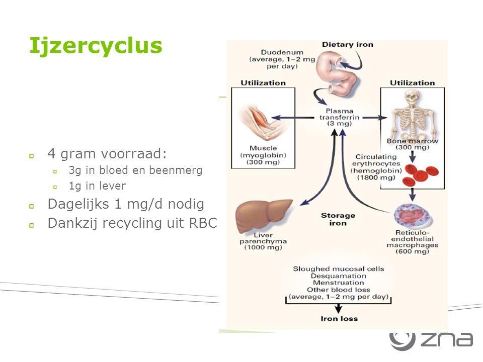 Ijzercyclus 4 gram voorraad: Dagelijks 1 mg/d nodig