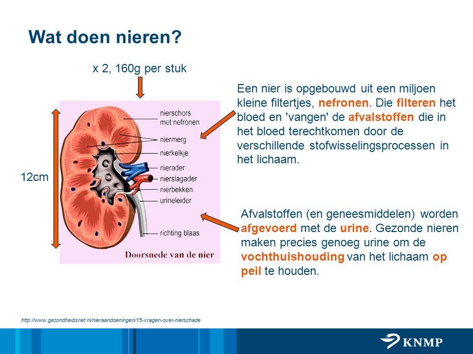 Wat doen nieren x 2, 160g per stuk
