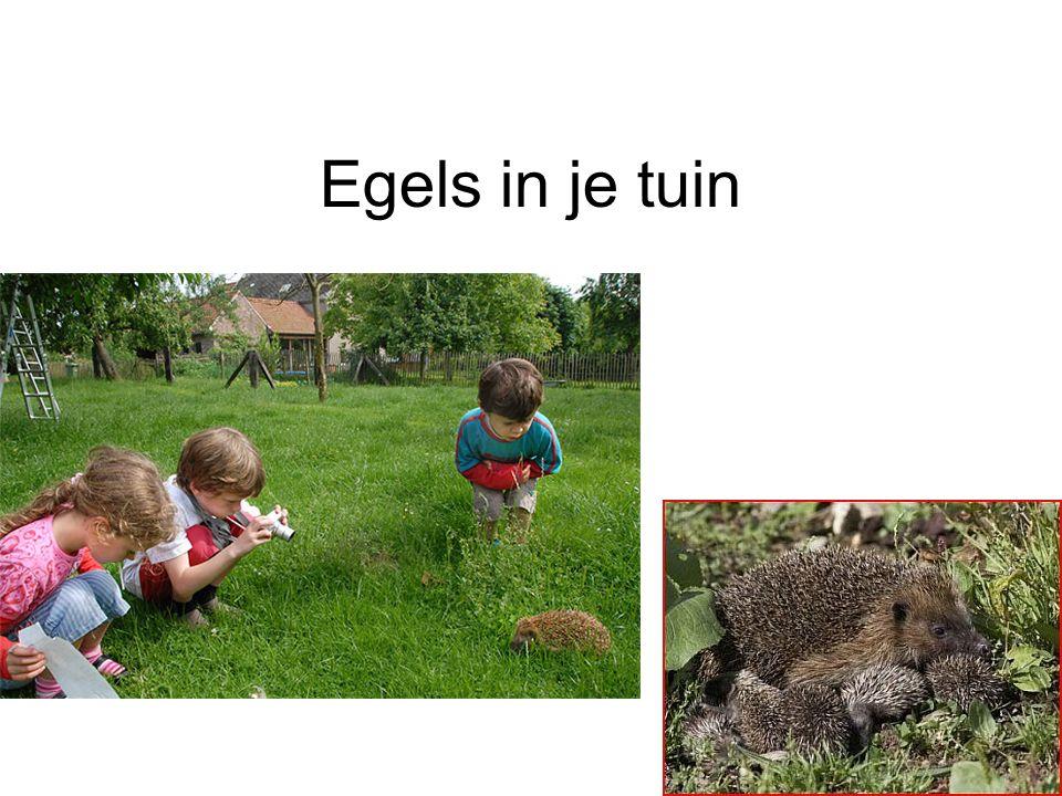 Egels in je tuin