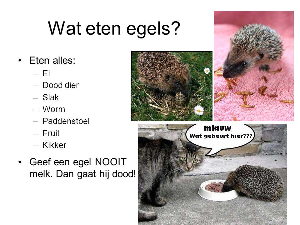 welk zoogdier legt alleen in de lente eieren