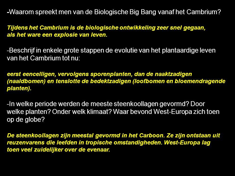 -Waarom spreekt men van de Biologische Big Bang vanaf het Cambrium