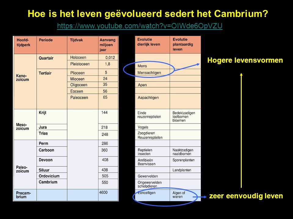 Hoe is het leven geëvolueerd sedert het Cambrium