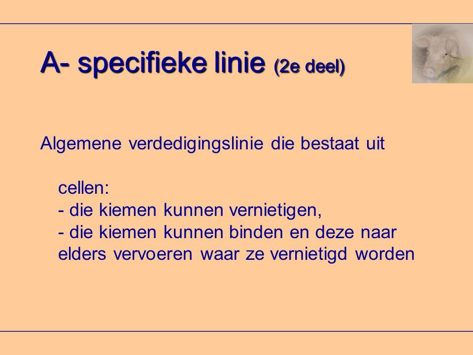 A- specifieke linie (2e deel)