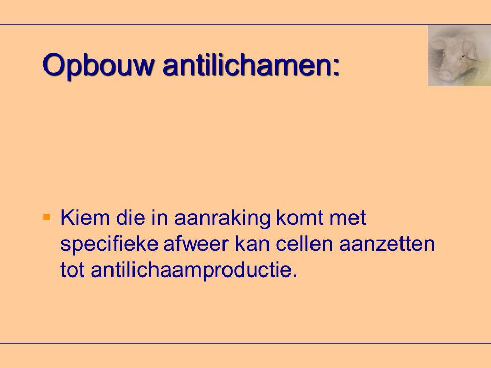 Opbouw antilichamen: Kiem die in aanraking komt met specifieke afweer kan cellen aanzetten tot antilichaamproductie.
