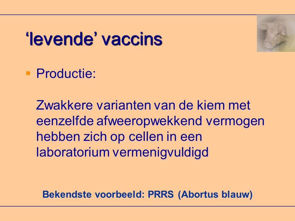 Bekendste voorbeeld: PRRS (Abortus blauw)