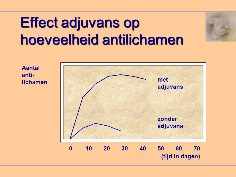 Effect adjuvans op hoeveelheid antilichamen