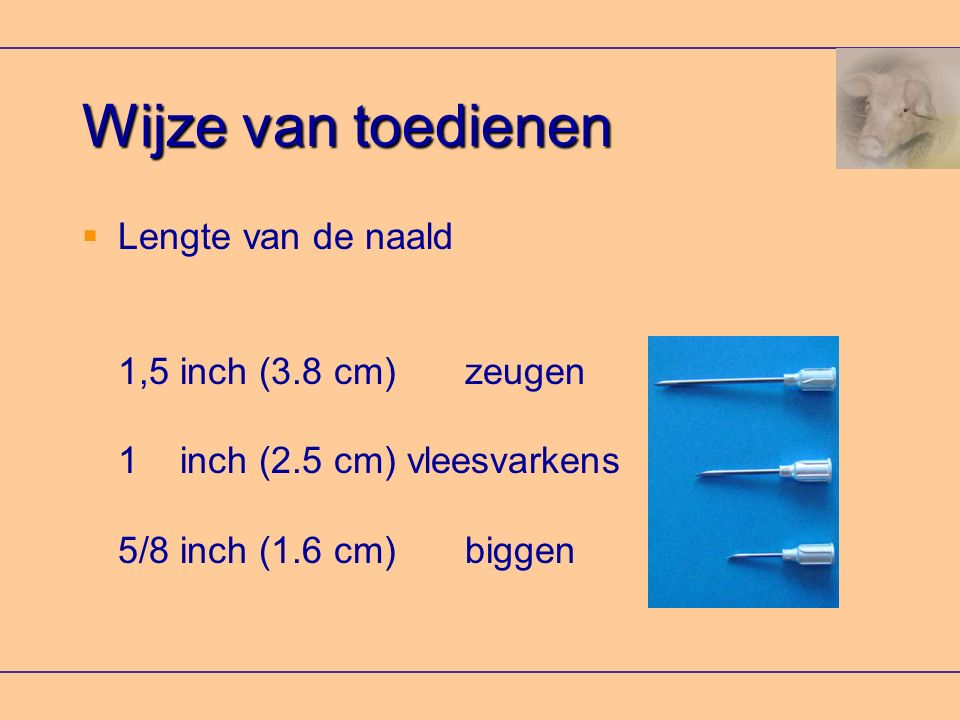 Wijze van toedienen Lengte van de naald 1,5 inch (3.8 cm) zeugen 1 inch (2.5 cm) vleesvarkens 5/8 inch (1.6 cm) biggen.