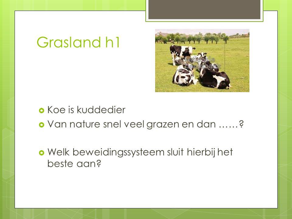 Grasland h1 Koe is kuddedier Van nature snel veel grazen en dan ……