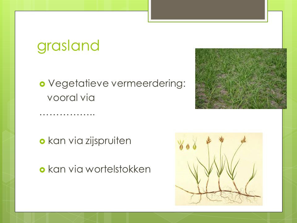 grasland Vegetatieve vermeerdering: vooral via ……………..