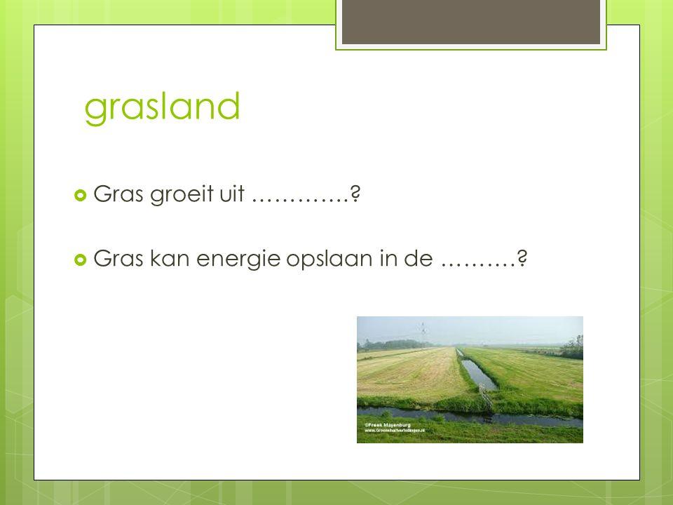 grasland Gras groeit uit …………. Gras kan energie opslaan in de ……….
