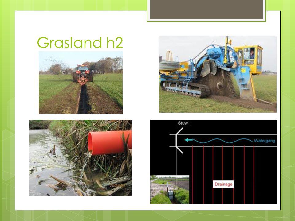 Grasland h2 nn