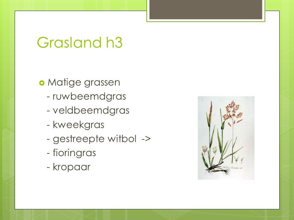 Grasland h3 Matige grassen - ruwbeemdgras - veldbeemdgras - kweekgras