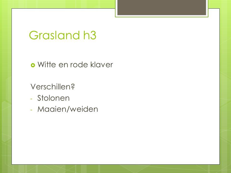 Grasland h3 Witte en rode klaver Verschillen Stolonen Maaien/weiden
