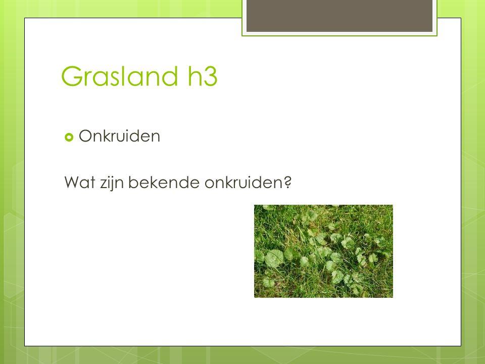 Grasland h3 Onkruiden Wat zijn bekende onkruiden