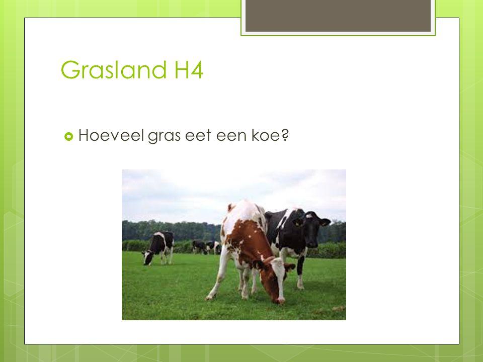 Grasland H4 Hoeveel gras eet een koe
