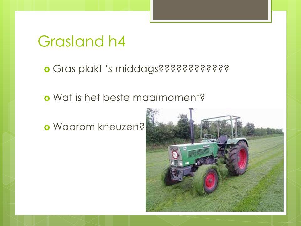 Grasland h4 Gras plakt 's middags