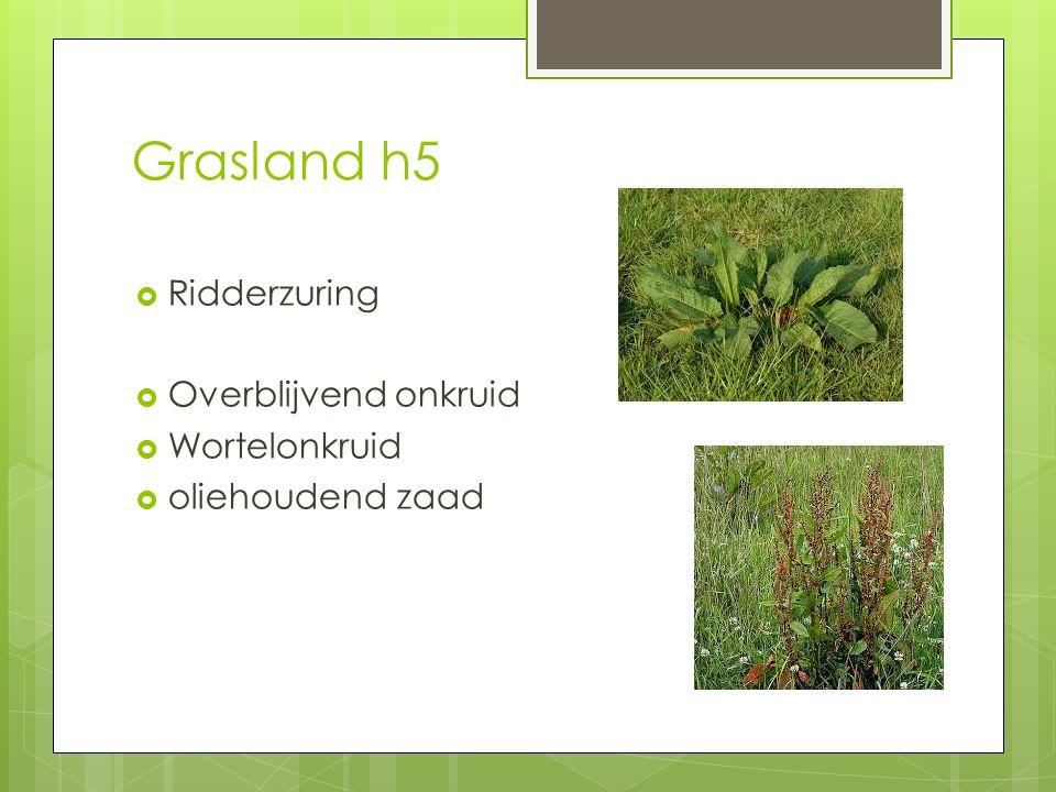 Grasland h5 Ridderzuring Overblijvend onkruid Wortelonkruid