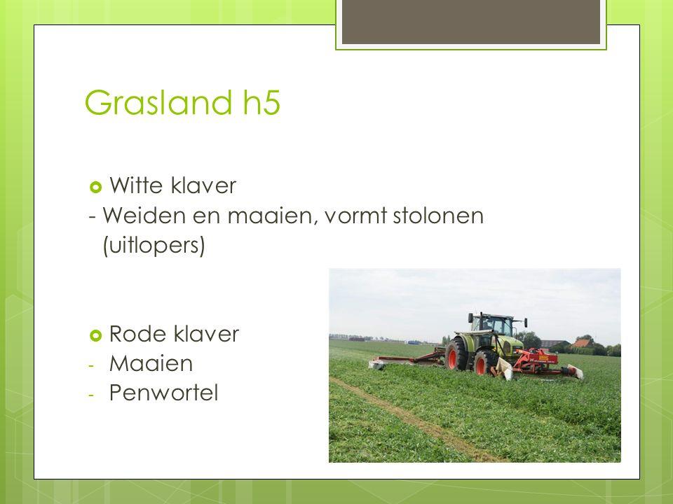 Grasland h5 Witte klaver - Weiden en maaien, vormt stolonen