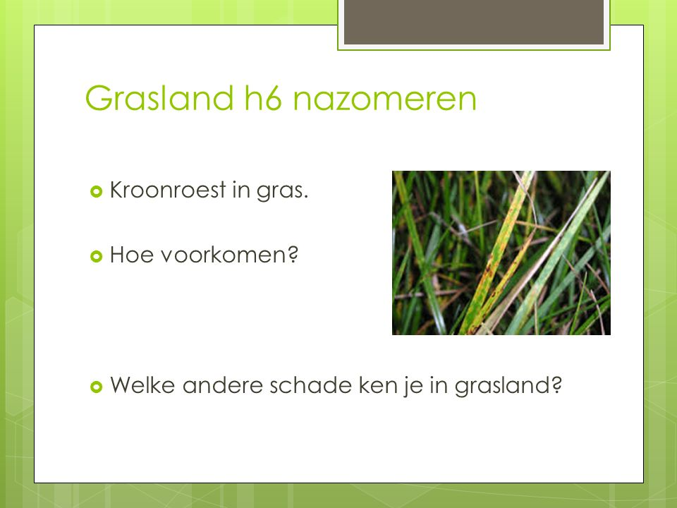 Grasland h6 nazomeren Kroonroest in gras. Hoe voorkomen