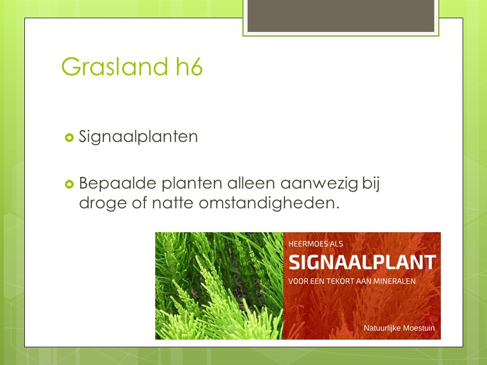 Grasland h6 Signaalplanten