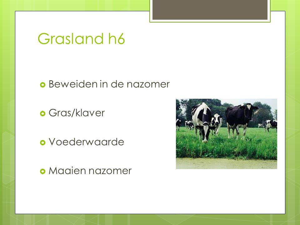 Grasland h6 Beweiden in de nazomer Gras/klaver Voederwaarde