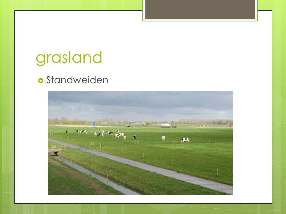 grasland Standweiden