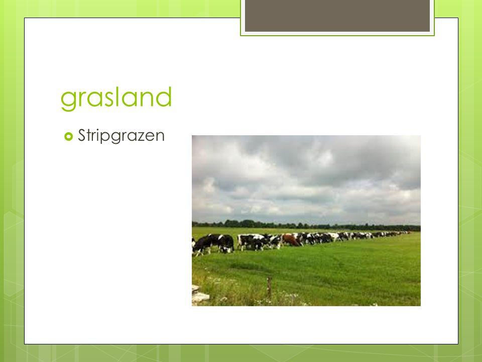 grasland Stripgrazen