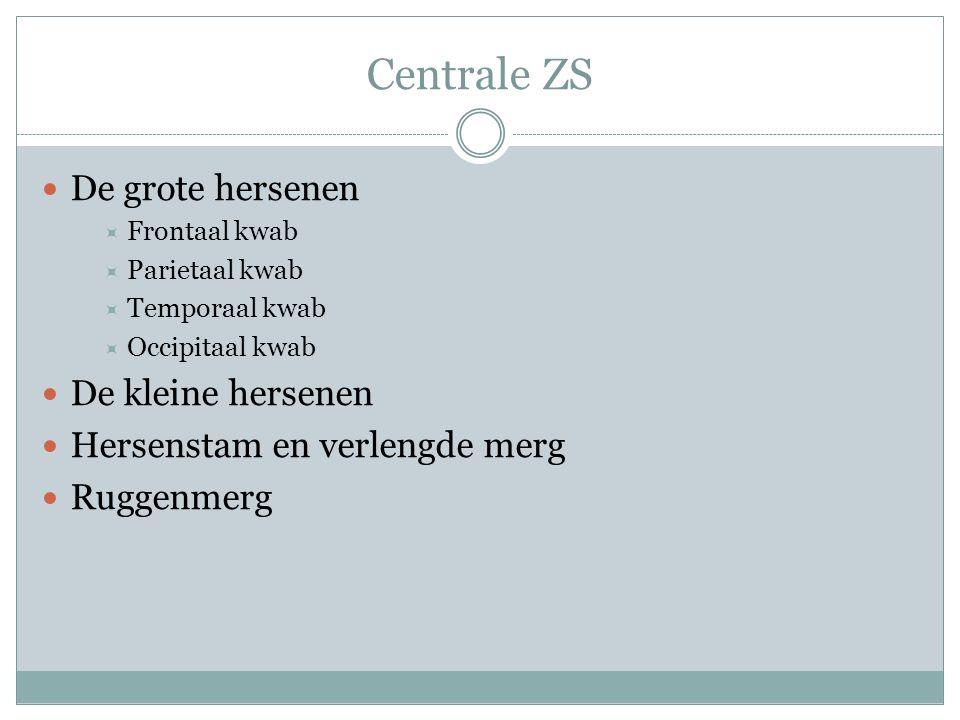 Centrale ZS De grote hersenen De kleine hersenen