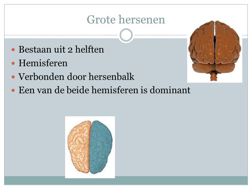 Grote hersenen Bestaan uit 2 helften Hemisferen