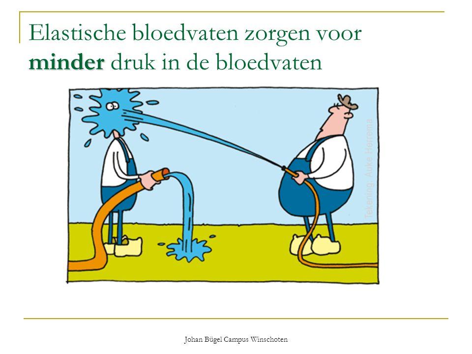 Elastische bloedvaten zorgen voor minder druk in de bloedvaten