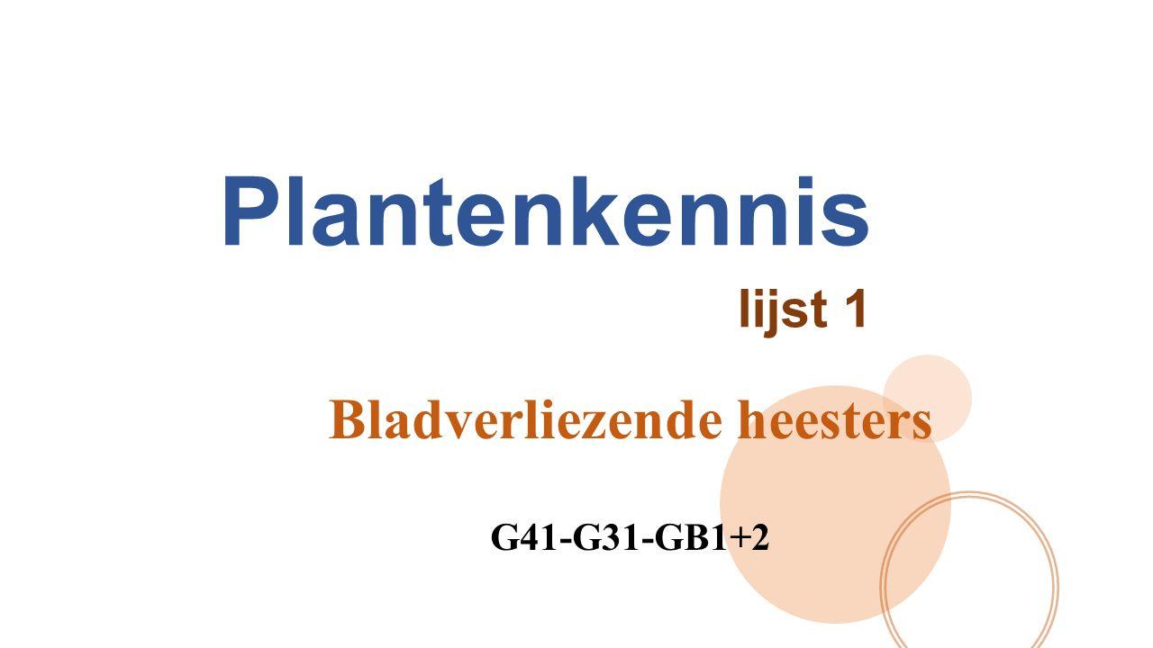 Bladverliezende heesters G41-G31-GB1+2
