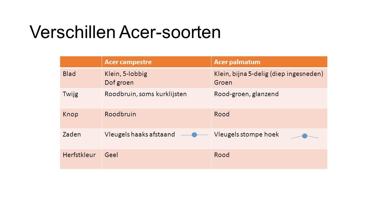 Verschillen Acer-soorten