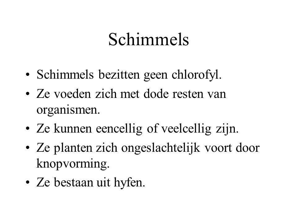 Schimmels Schimmels bezitten geen chlorofyl.