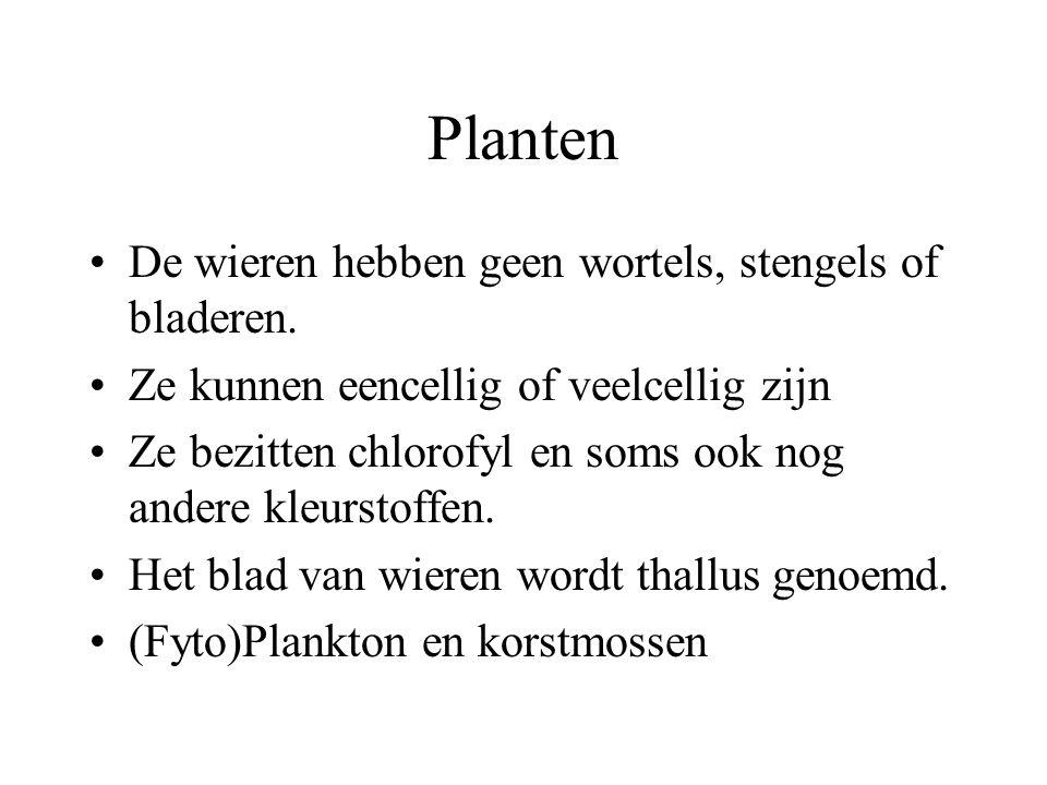 Planten De wieren hebben geen wortels, stengels of bladeren.