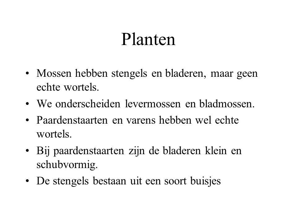 Planten Mossen hebben stengels en bladeren, maar geen echte wortels.