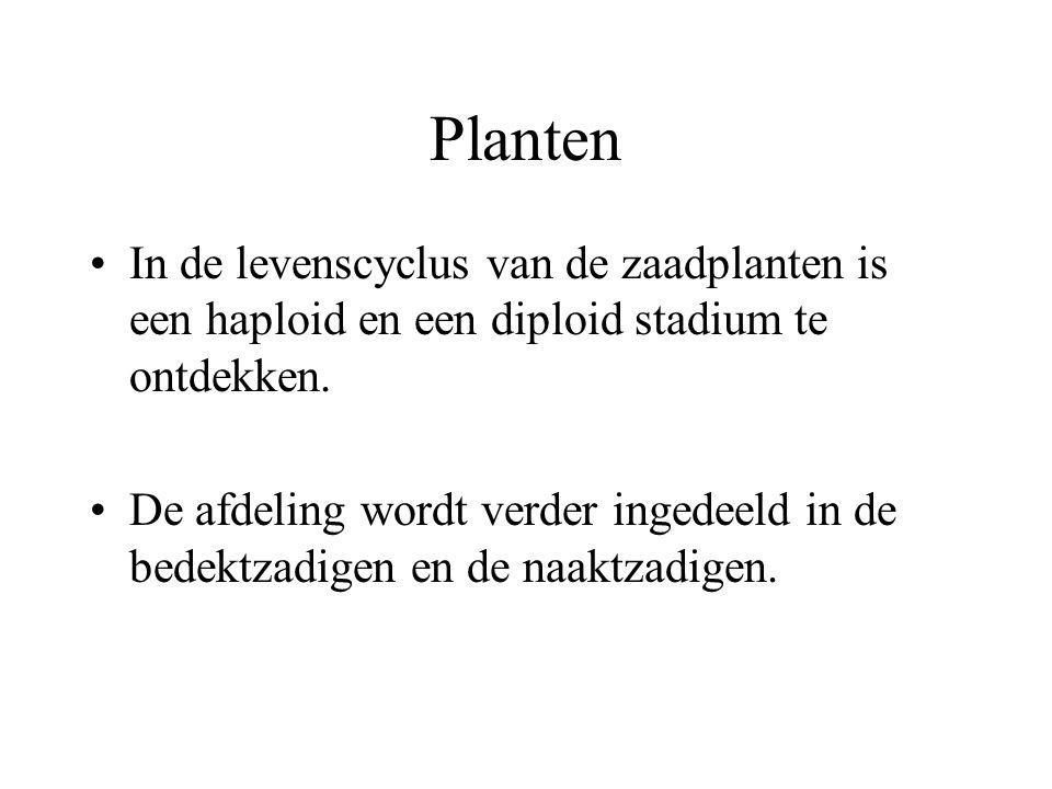 Planten In de levenscyclus van de zaadplanten is een haploid en een diploid stadium te ontdekken.