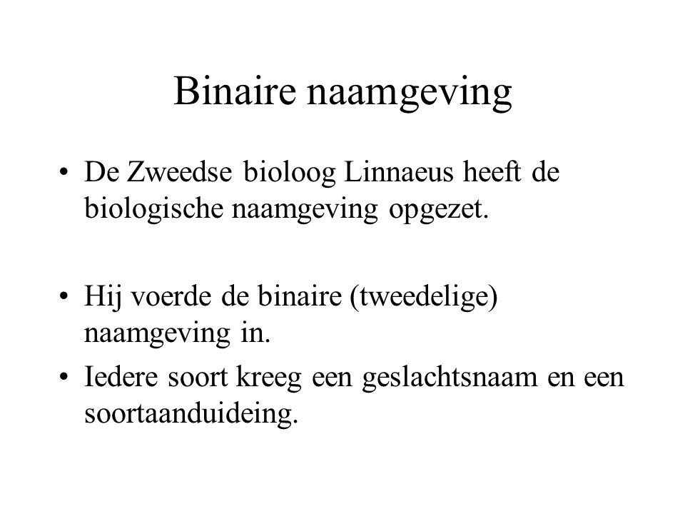 Binaire naamgeving De Zweedse bioloog Linnaeus heeft de biologische naamgeving opgezet. Hij voerde de binaire (tweedelige) naamgeving in.