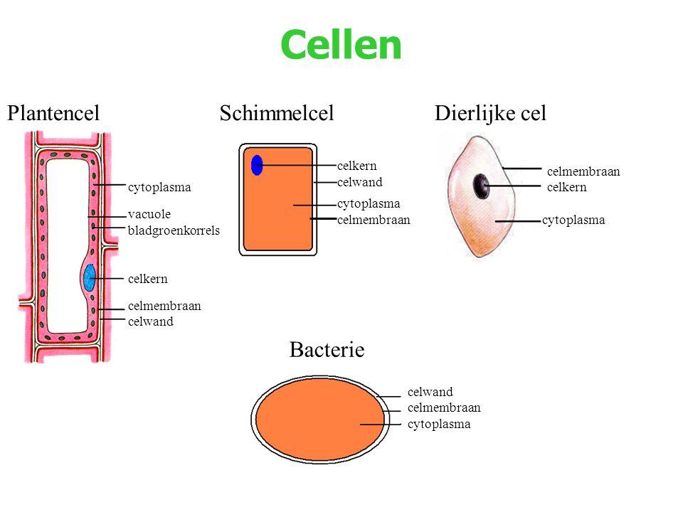 Cellen Plantencel Schimmelcel Dierlijke cel Bacterie celkern