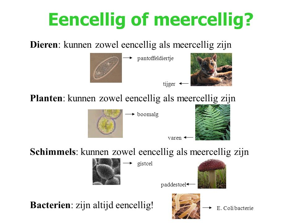 Eencellig of meercellig