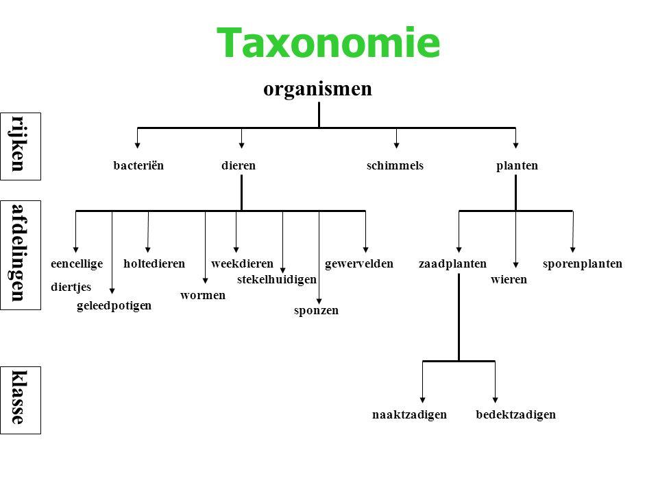 Taxonomie organismen rijken afdelingen klasse bacteriën dieren