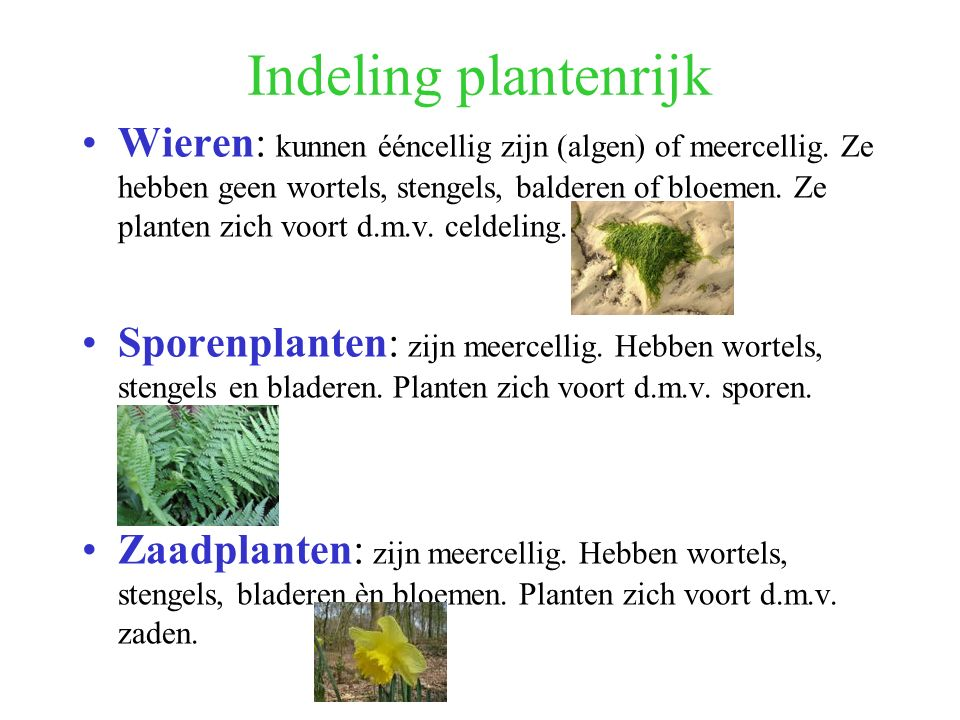 Indeling plantenrijk