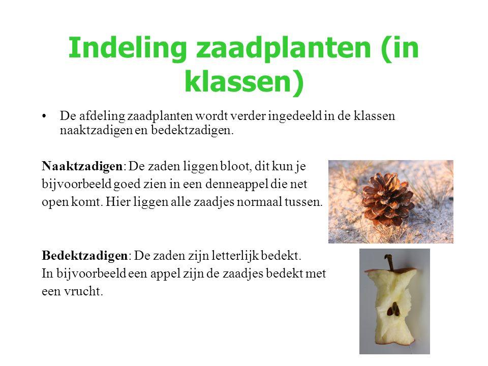 Indeling zaadplanten (in klassen)