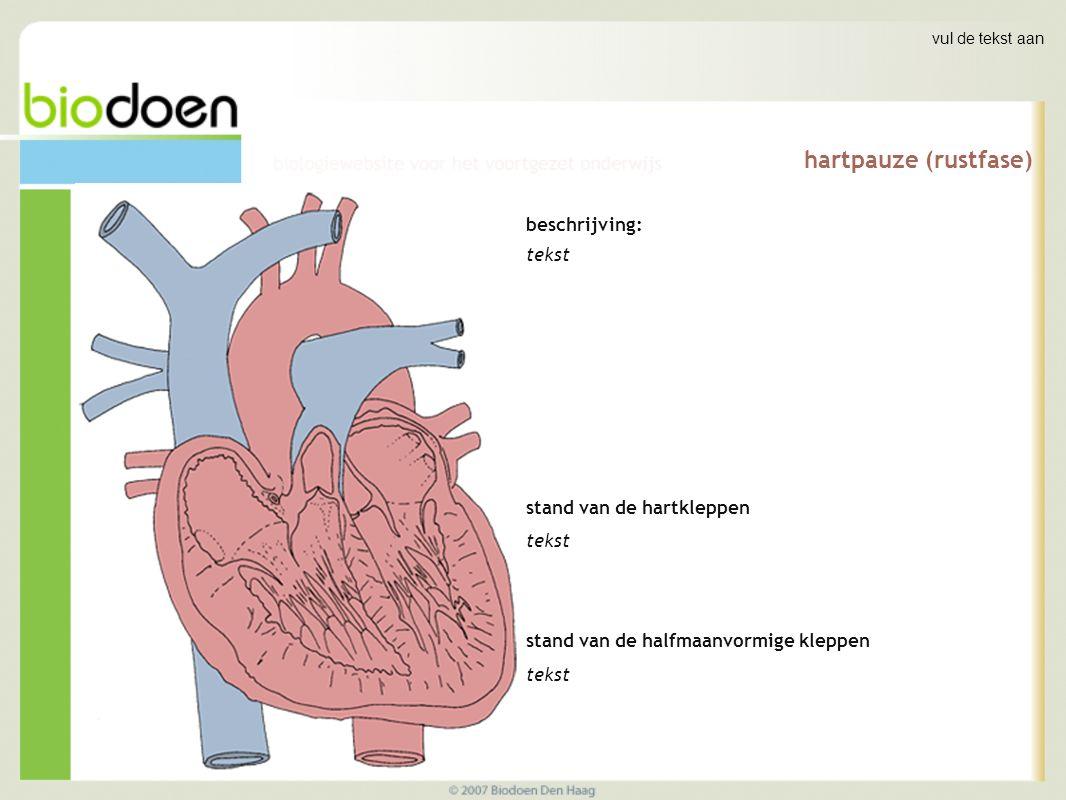 hartpauze (rustfase) beschrijving: tekst stand van de hartkleppen