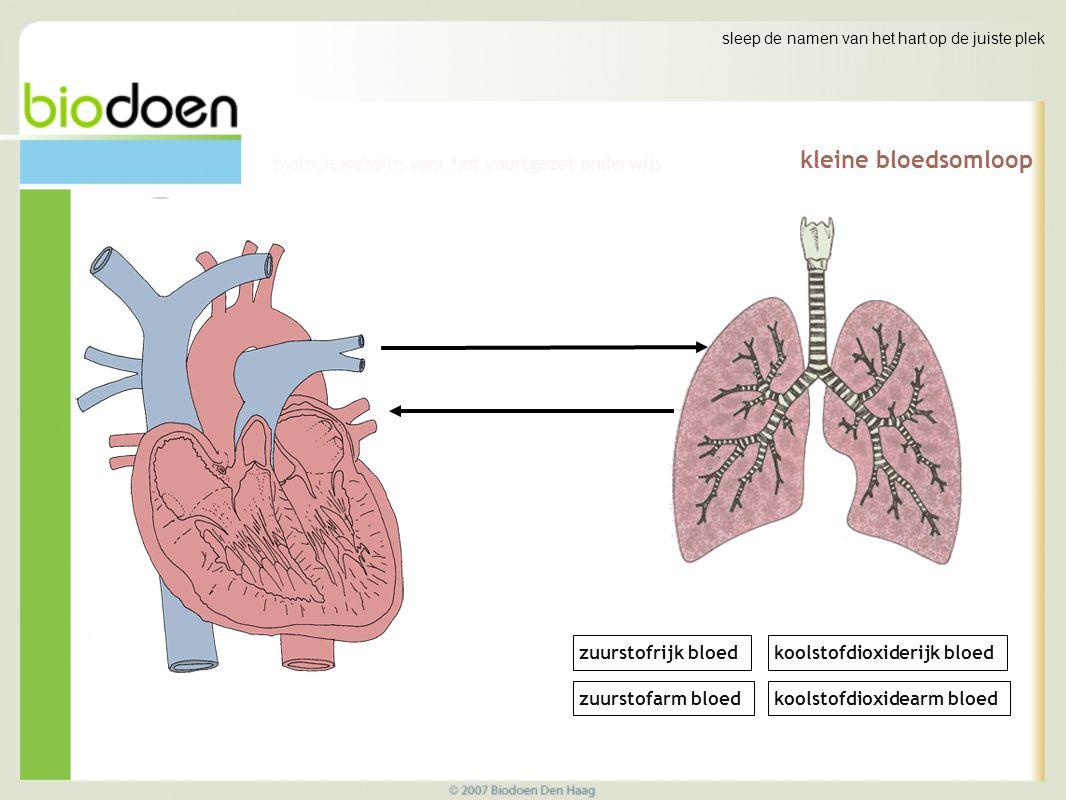 kleine bloedsomloop zuurstofrijk bloed koolstofdioxiderijk bloed
