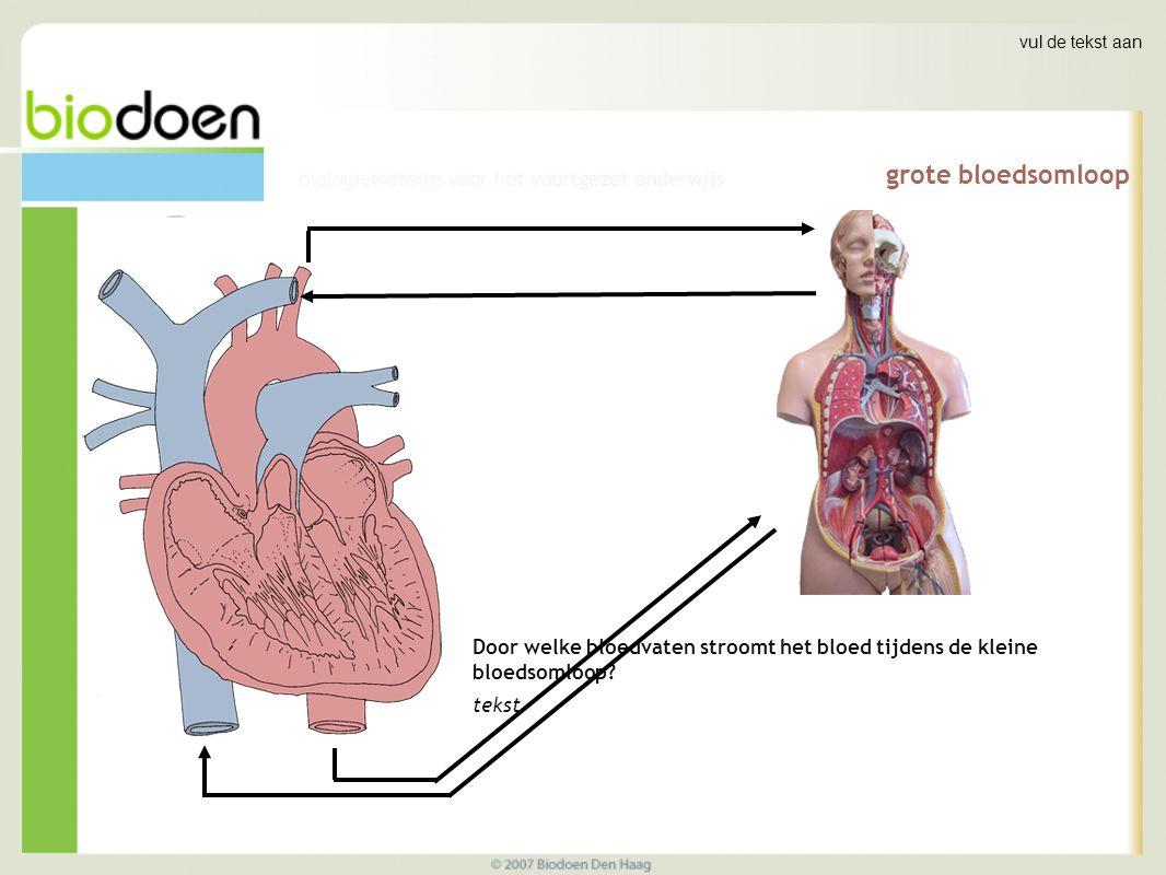 vul de tekst aan grote bloedsomloop. Door welke bloedvaten stroomt het bloed tijdens de kleine bloedsomloop