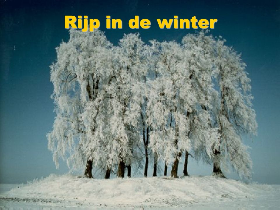 Rijp in de winter