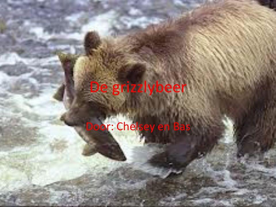 De grizzlybeer Door: Chelsey en Bas