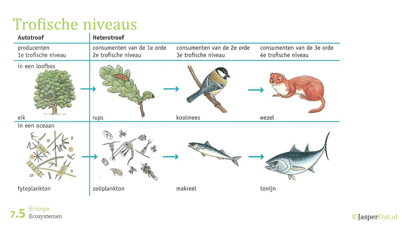 Trofische niveaus 7.5 Ecologie Ecosystemen ©JasperOut.nl