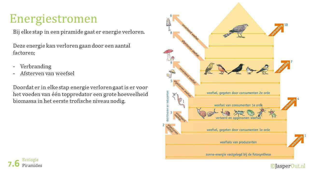 Energiestromen Bij elke stap in een piramide gaat er energie verloren. Deze energie kan verloren gaan door een aantal factoren;
